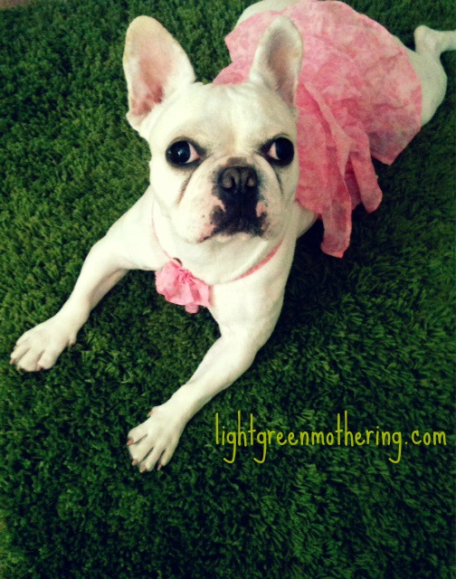 Frenchie Friday ~ lightgreenmothering.com