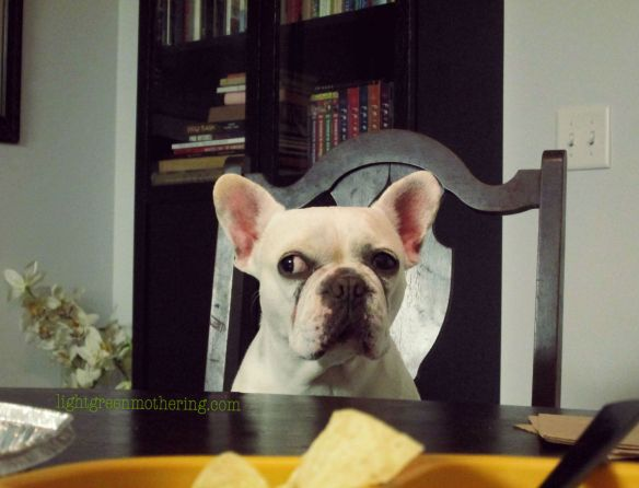 Frenchie Friday!! ~lightgreenmothering.com
